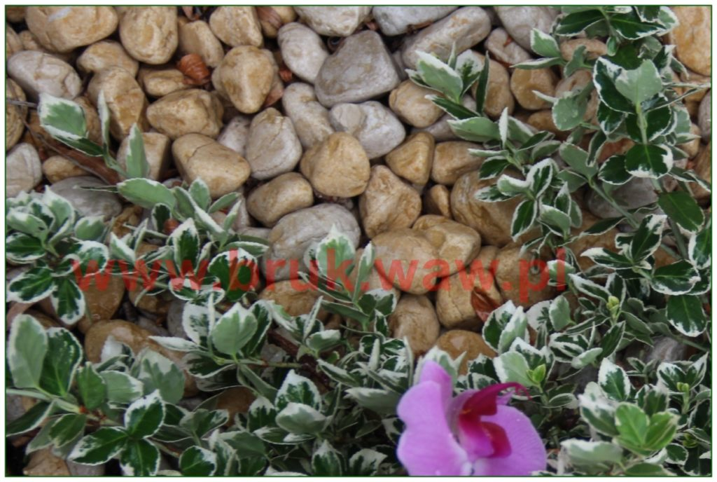 kamienie-w-ogrodzie_106